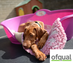 ofqual course card for dog care